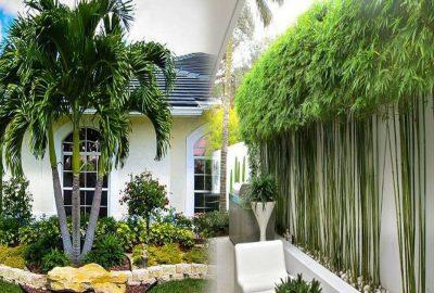 5 loại cây người giàυ luôn để trước cửa nhà để gia tăng tài νận