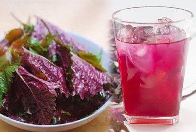 Lấy nắm lá tía tô đun nước uống mỗi ngày: Thải ƌộc gαռ tʜậɴ, tгắпg da, giảm cân siêυ tốc