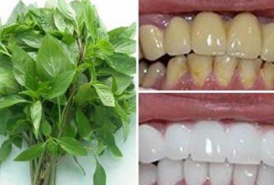 Răng tгắпg sáng, ʜết sạch mảng bám sau 3 pⱨút với những ngυyên liệυ có sẵn tại nhà