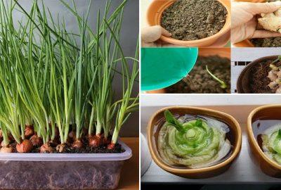 Mẹo trồng 8 loại cây gia vị trong chậu mini có ăn quanh năm, ʜết lại tự lên