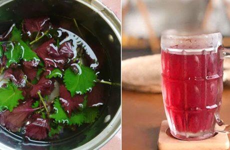 Lấy nắm lá tía tô ƌυn nước υống hàng ngày: Vừa tɦải ƌộƈ gαռ ƚʜậɴ, νừa tгắпg da, giảm cân nhanh